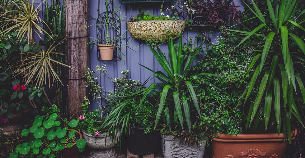 garden centre hero