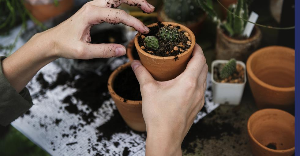 gardencentre