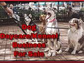 Popular Dog Daycare And Boarding Business For Sale