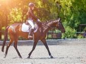 Sport - Freehold Available - Equestrian Centre - Riding School - Sales $18,500 Pw Freehold Available - Equestrian Centre - Riding School - Dressage - Horses - Profit $9,350 Pw - Gold Coast - Queensland For Sale