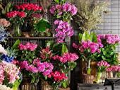 Florist -- Epping -- #4924136 For Sale