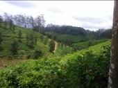 Coffee Tea Plantation In Ooty For Sale